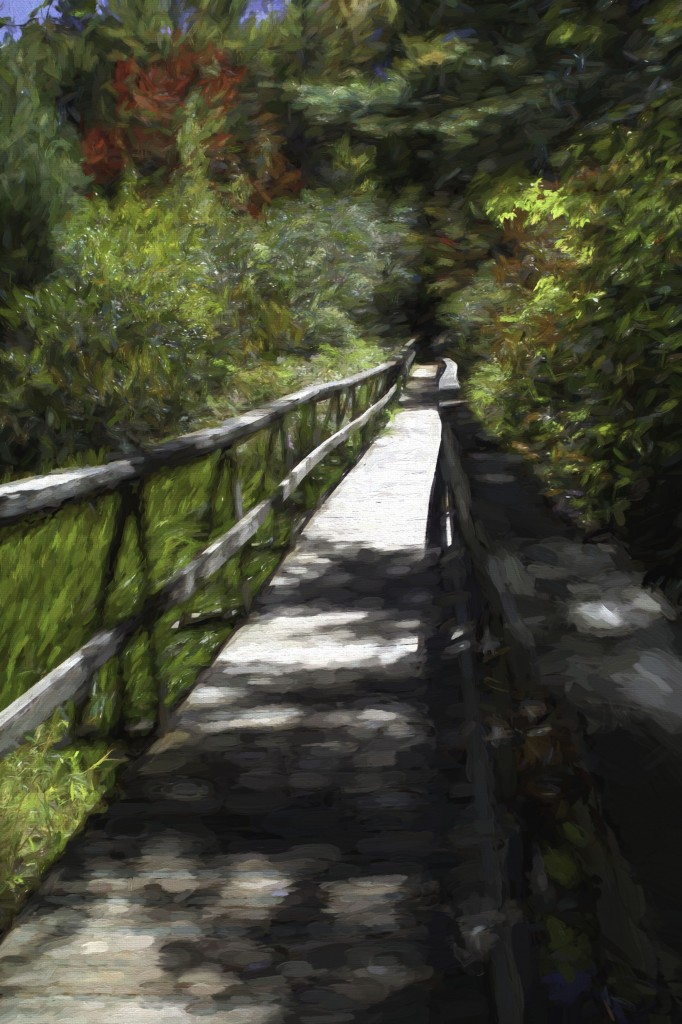 Stay with me on the path to joy through digital photography